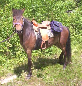 dreamerpacking1.jpg
